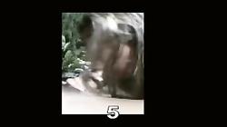 Miko pool suck